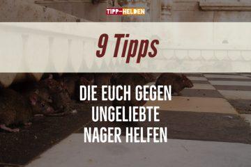 9 Tipps gegen Nager