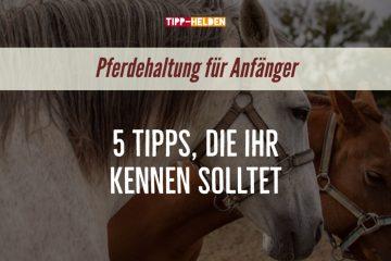 Tipps Pferdehaltung