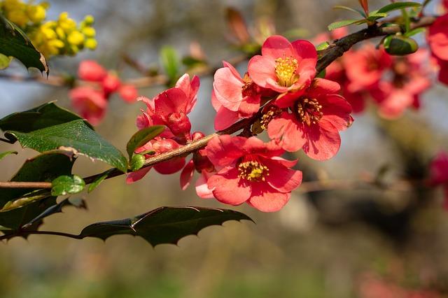 Frühling und Frühjahrsputz 02