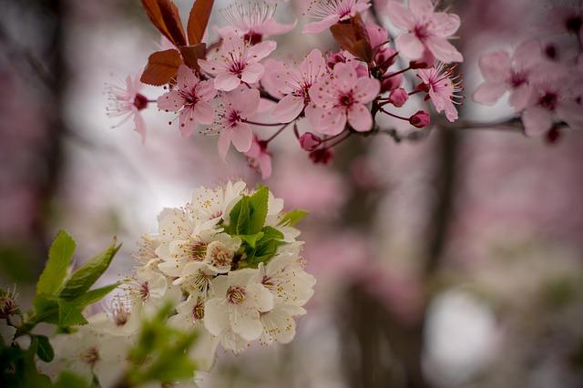 Frühling und Frühjahrsputz 03