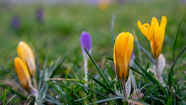 Frühling und Frühjahrsputz 04