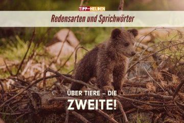 Redensarten und Sprichwörter über Tiere - Die Zweite!