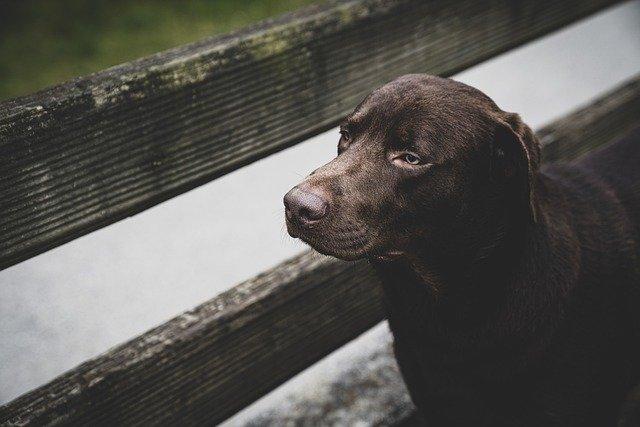 Zuhause sicherer - Hund