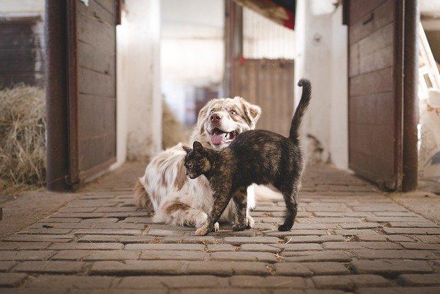 Redewendung - Hund und Katze