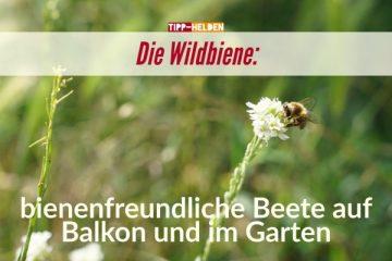 Tipp-Helden Die Wildbiene